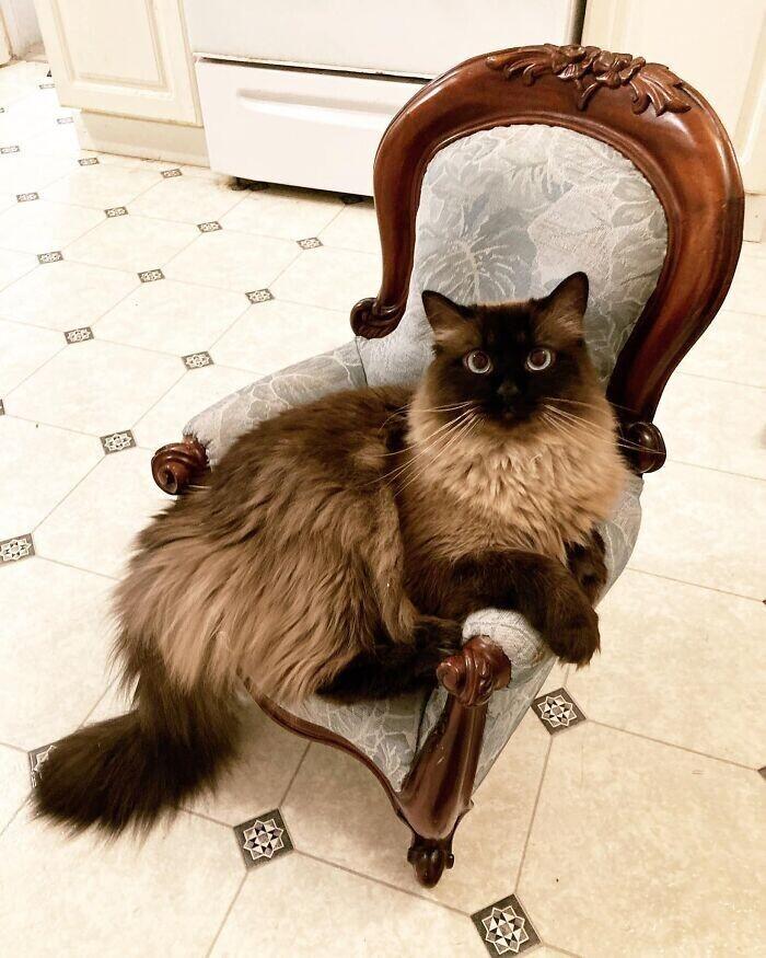 """3. """"Нашла этот потрясающий антикварный стул на распродаже и сразу поняла, что надо делать. И мой кот тоже понял"""""""