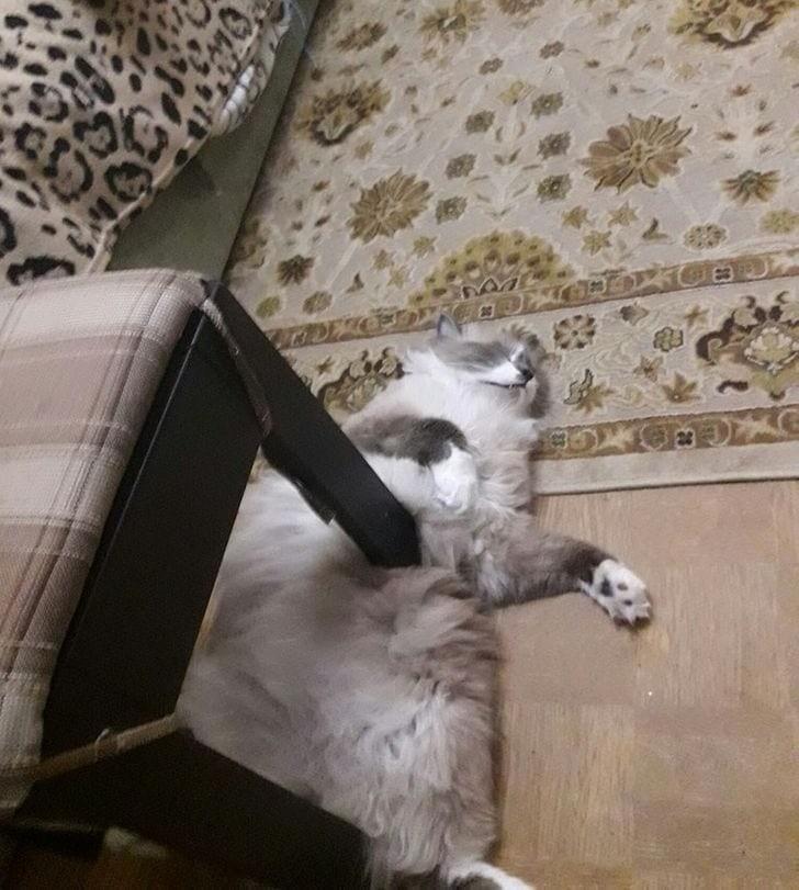 При исполнении трюка ни один кот не пострадал