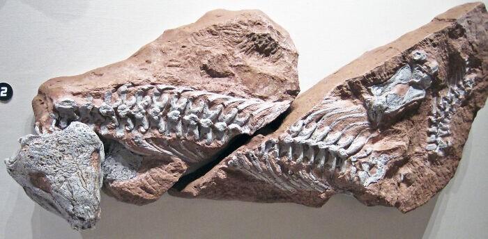 19. Палеонтолог