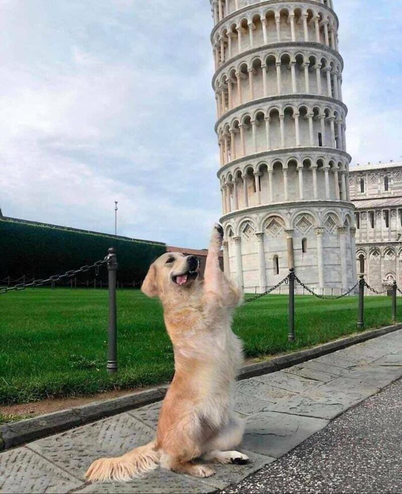 Похоже что она является единственной собакой, удерживающей Пизанскую Башню от падения