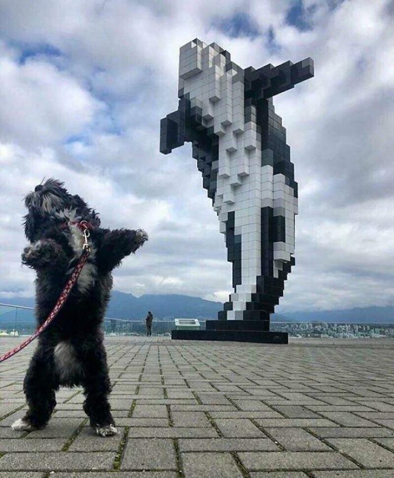 Эта забавная собачка решила повторить памятник, получилось практически идентично