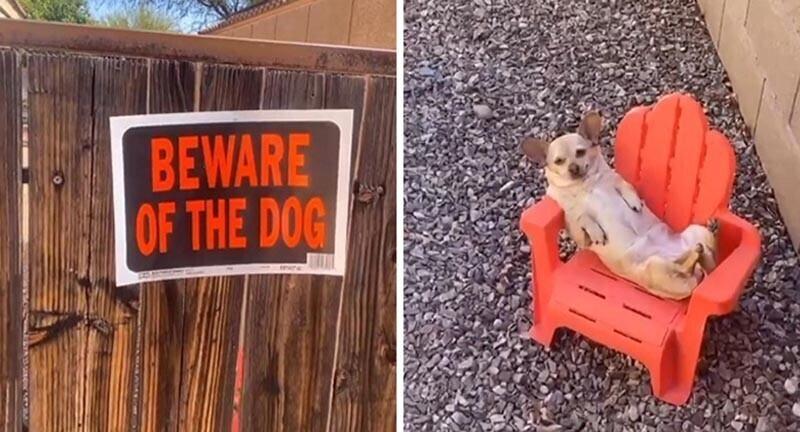 """""""Остерегайтесь собаки"""" / реальный зверь"""