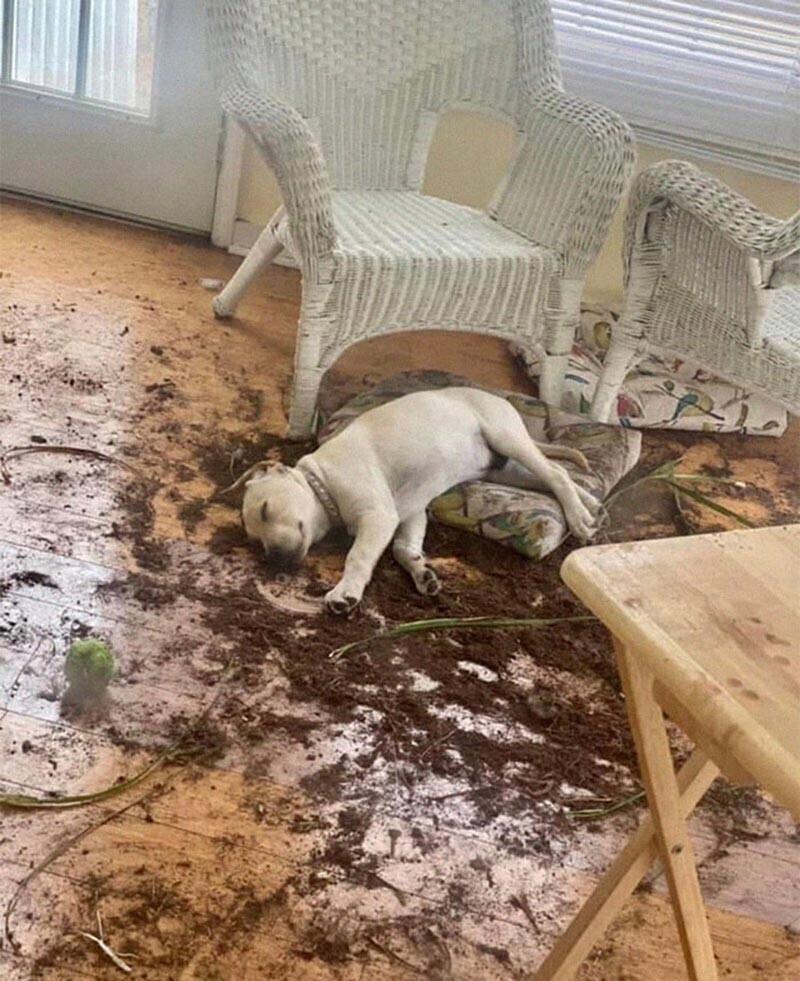 Сделал своё грязное дело и мирно уснул