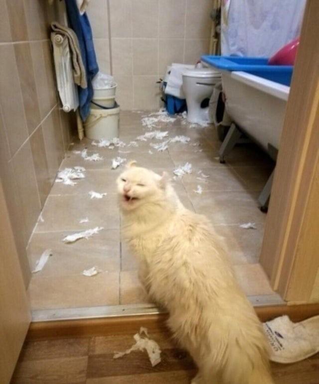 15 котов явно не в духе