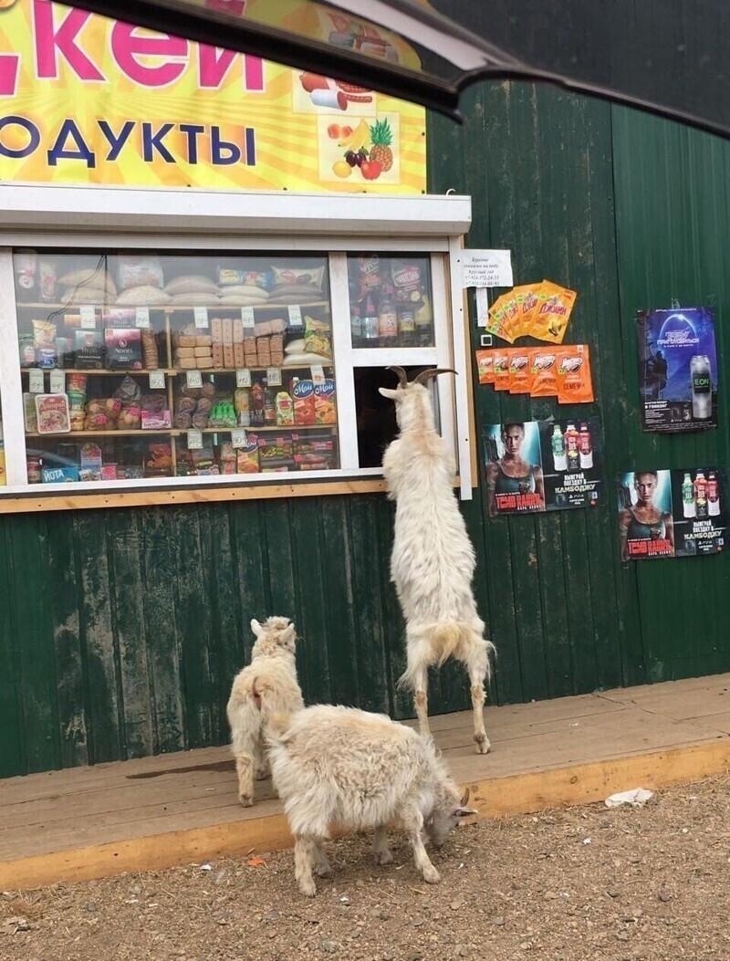 3. Местные покупатели