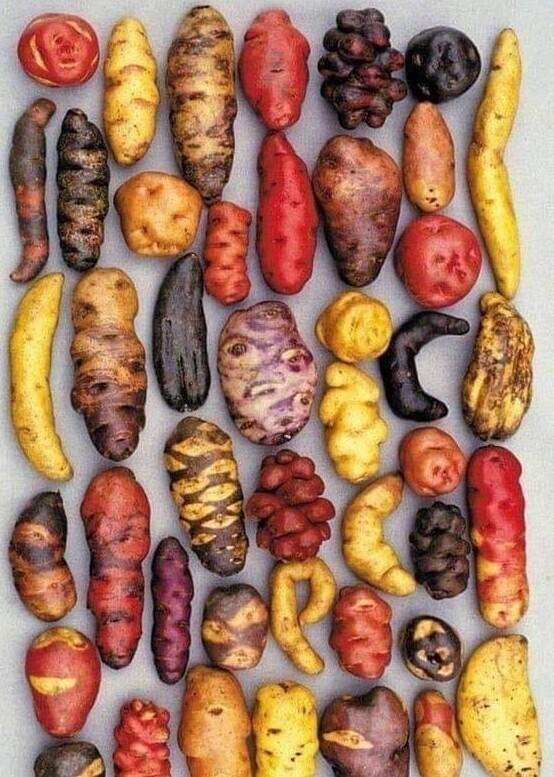 Разнообразие сортов картофеля, выращиваемого в Перу
