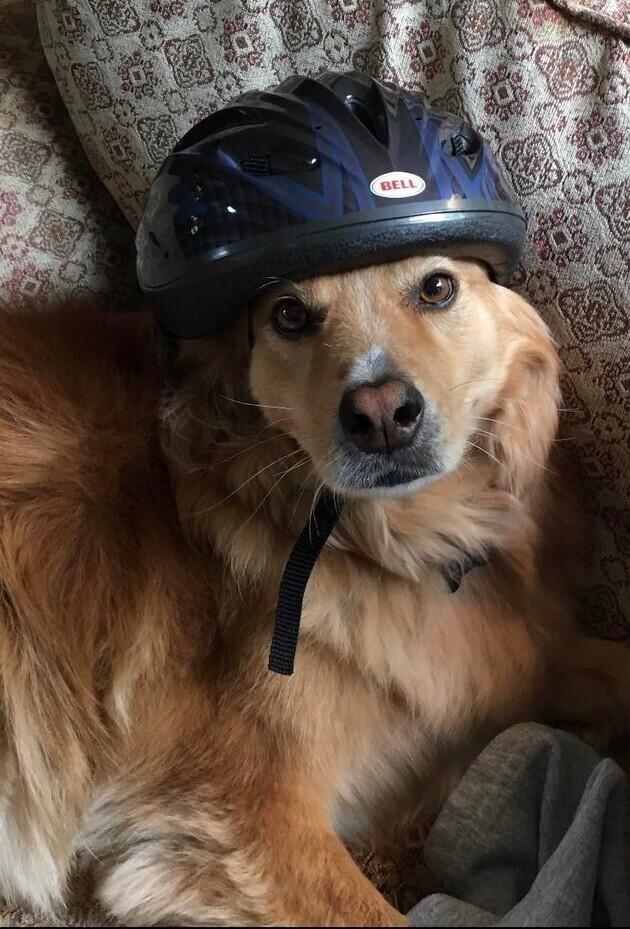 Мы оставили нашего пса у родителей, на время отпуска. Объявили штормовое предупреждение, и отец прислал нам такое фото Джека