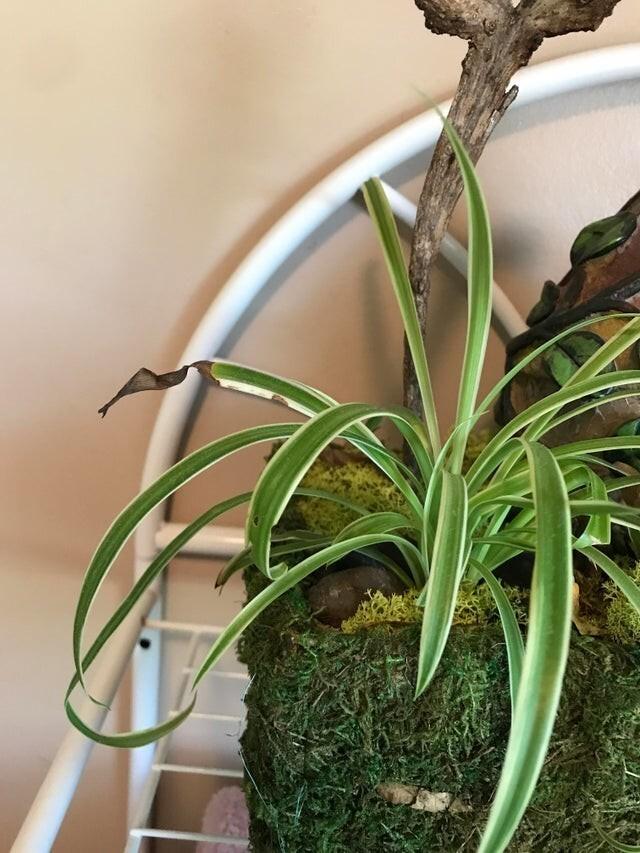 У этого фальшивого растения есть недостатки, чтобы оно казалось более реальным