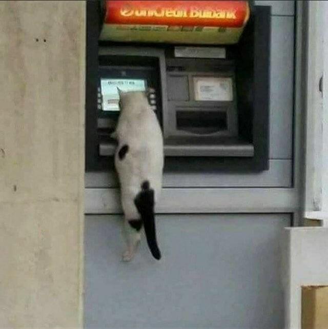 Всё-таки коты что-то замышляют