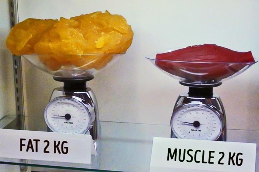 Два килограмма жира, по сравнению с двумя килограммами мышц
