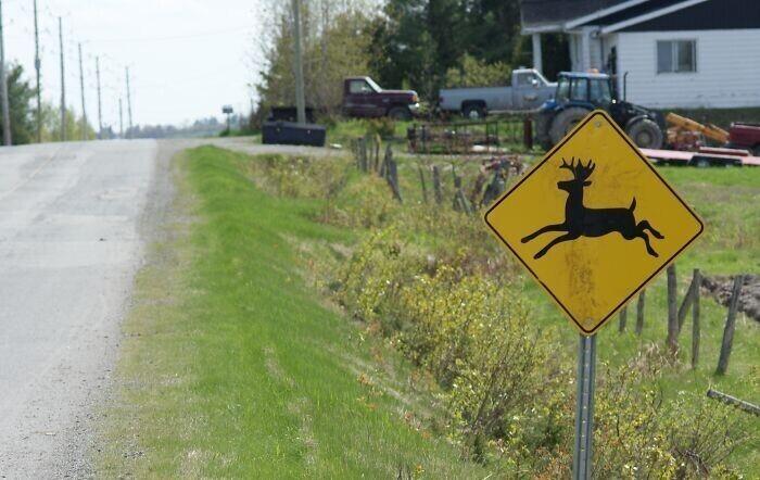 """""""Зачем вообще эти знаки с оленями у дороги? Оленям слишком опасно переходить дорогу"""""""