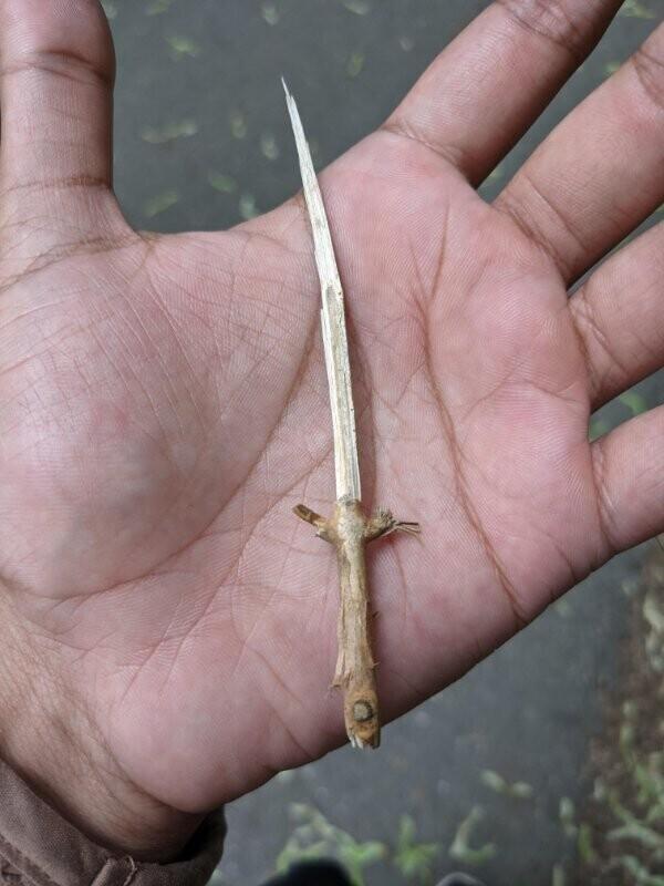 Щепка откололась  в виде меча