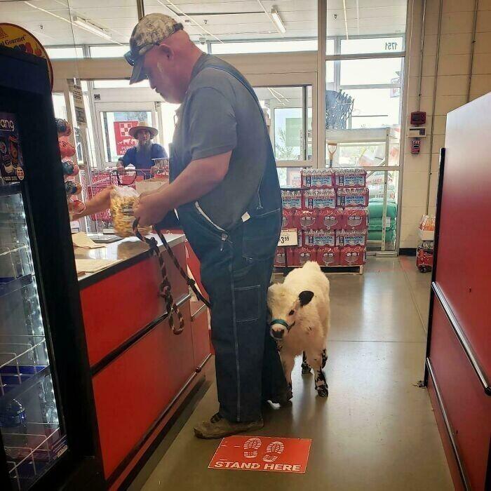 С какими только питомцами люди не ходят в магазин!