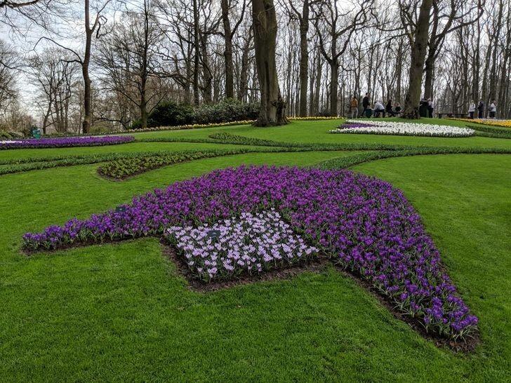Клумба с тюльпанами в виде огромного тюльпана? Почему бы и нет