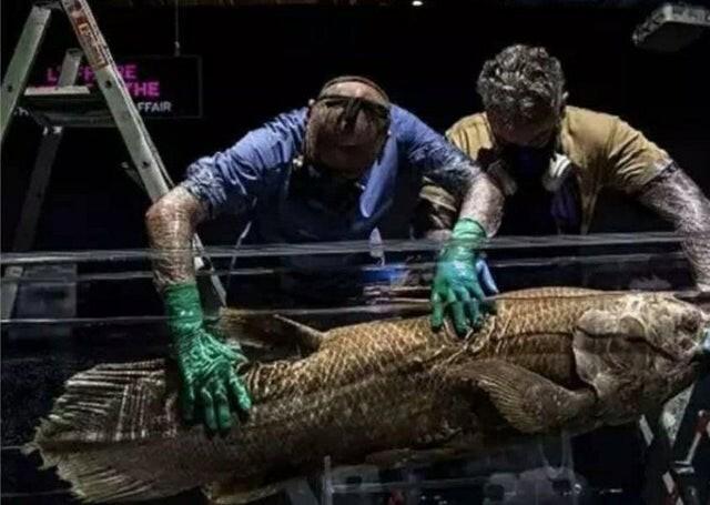 Целакант, рыба, сохранившаяся со времен динозавров