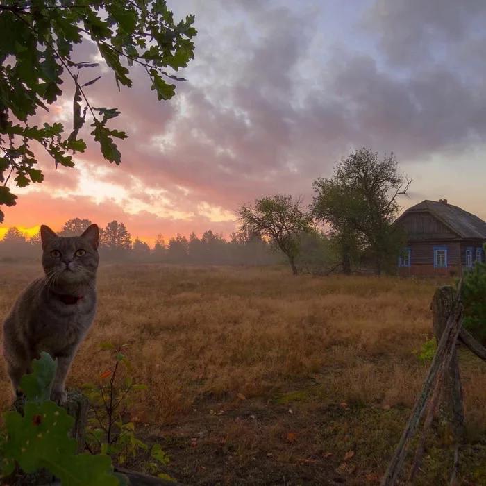 И кот, и вид рвут душу тем, кто провел свое детство в такой деревне