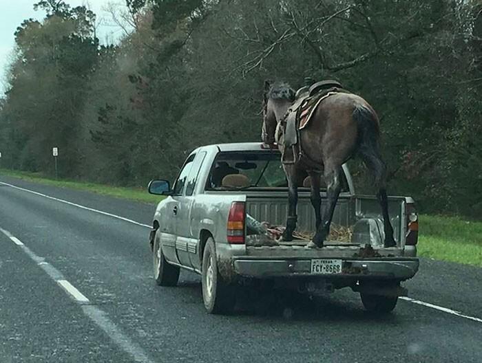 34. Эта лошадь либо очень воспитанная, либо напугана до смерти