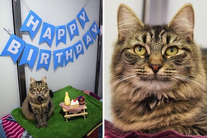 Приют решил устроить кошке Монике день рождения, надеясь найти ей хозяев. Но на праздник никто не пришел