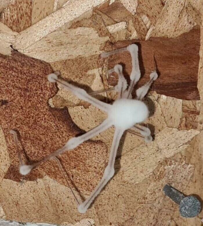 Не любите пауков? А как вам понравится паук-зомби, реанимированный захватившим его грибком?