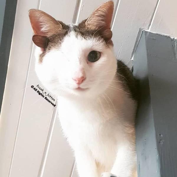 У этой кошки произошла мутация