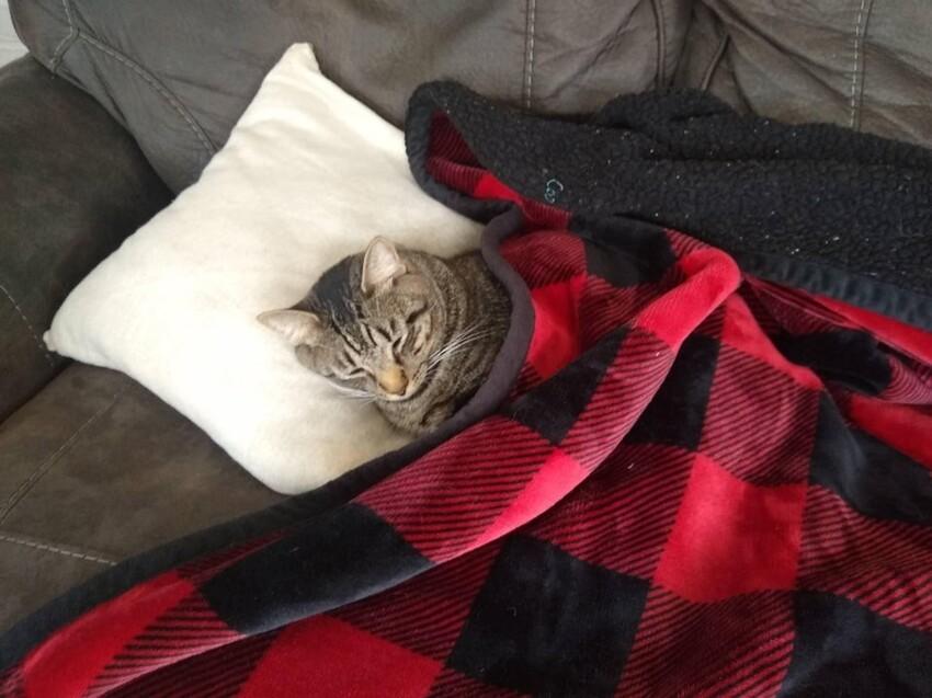 Мой муж очень трепетно заботится о нашем коте