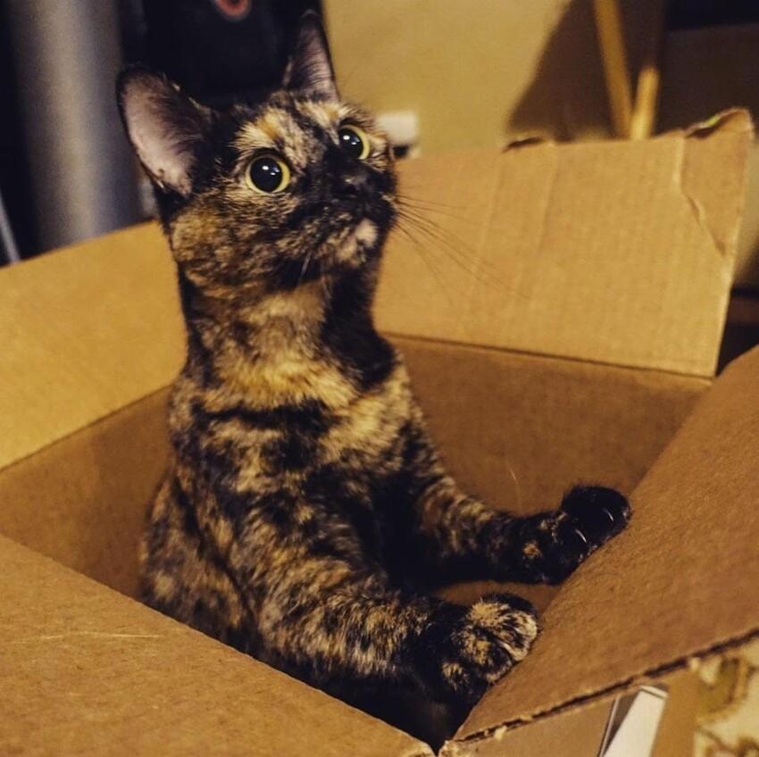 15 котиков, которые обожают коробки
