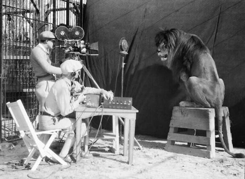 Съемки заставки Metro-Goldwyn-Mayer со львом, 1929 год