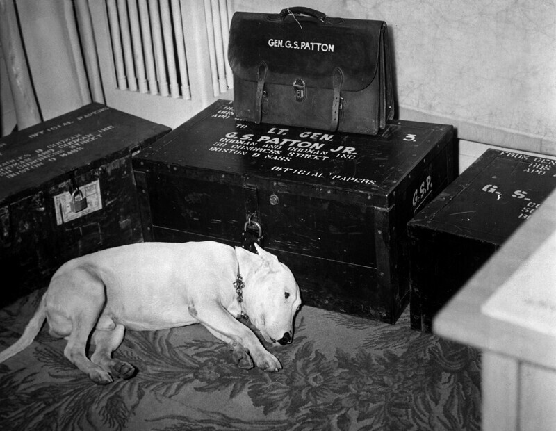 Собака генерала американского штаба Второй мировой войны, Джорджа Смита Паттона, в день его смерти 21 декабря 1945 года