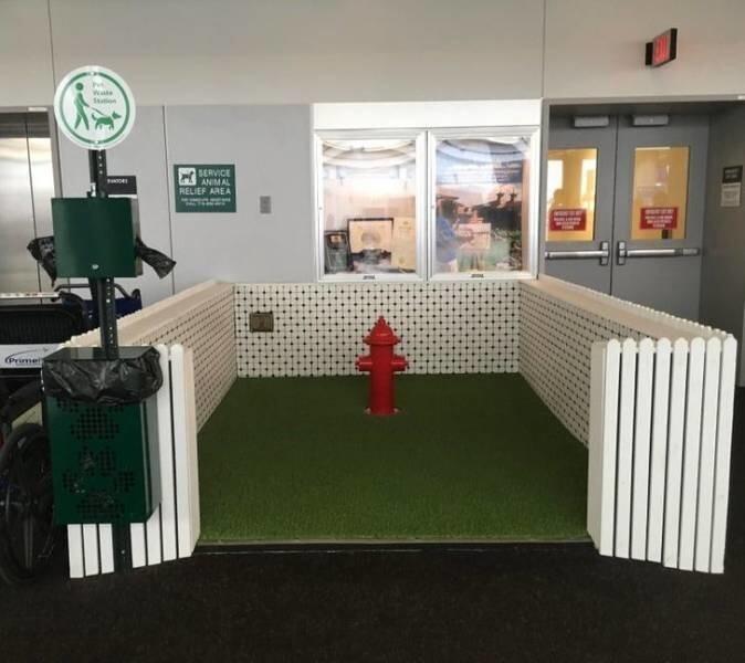 13. Туалет для служебных собак в аэропорту