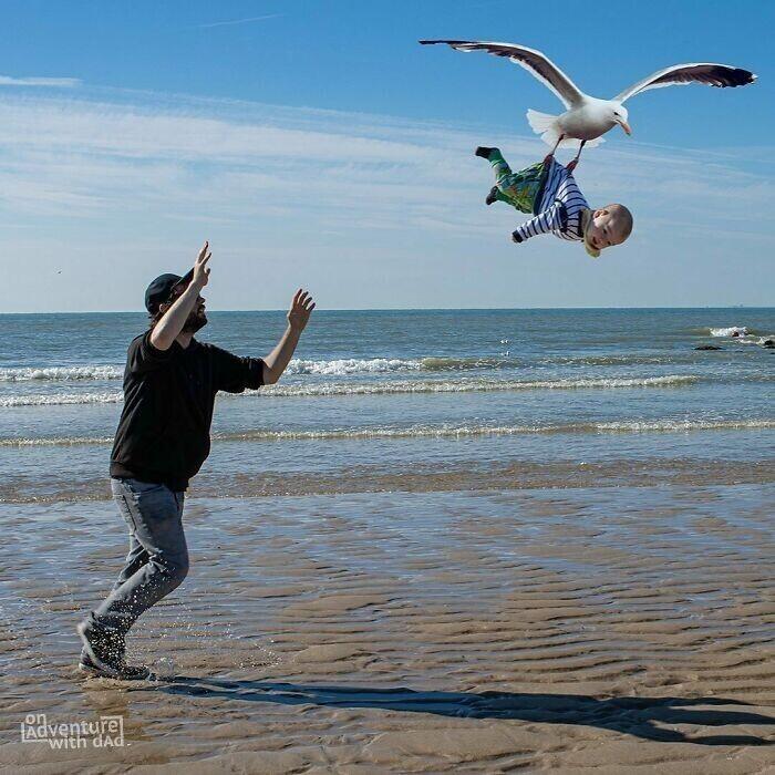 Бельгийские чайки очень агрессивны