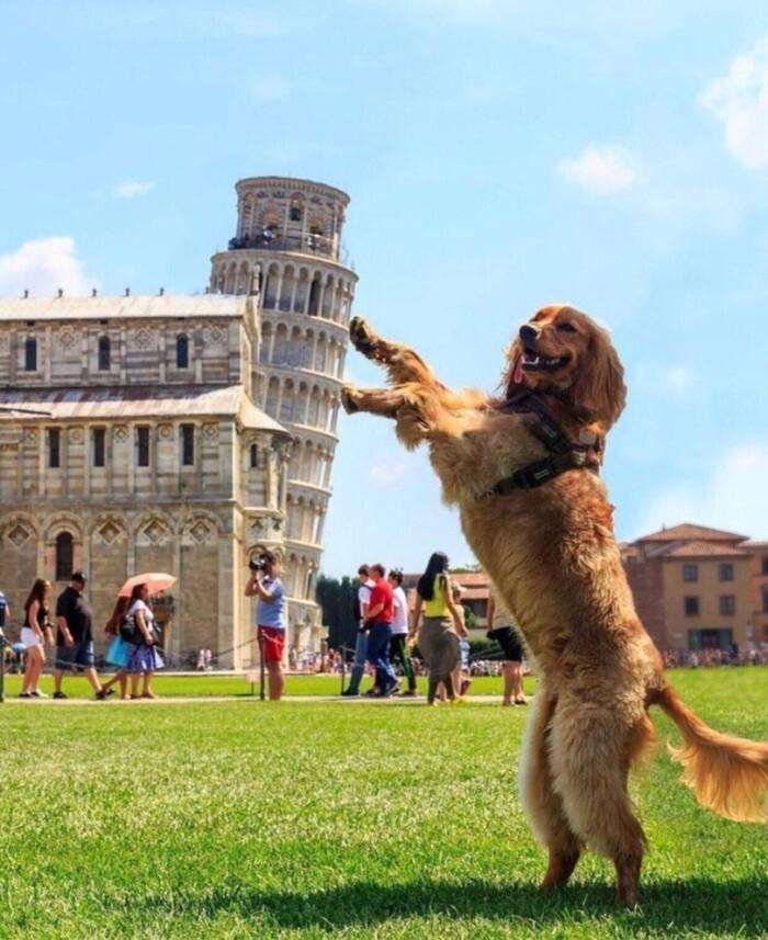 4. Вся Италия держится на плечах этого господина