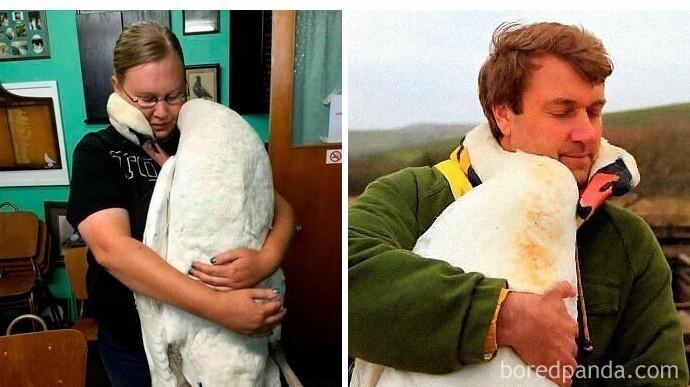 """""""Теперь я знаю, как обнимаются лебеди"""""""