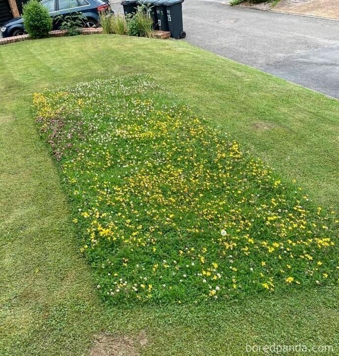 Косильщик газонов оставил у дома прямоугольник с полевыми цветами, чтобы пчелы могли собирать нектар