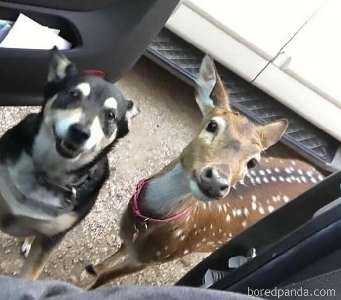 """Пес убежал из дома, но вскоре вернулся с новым другом"""""""