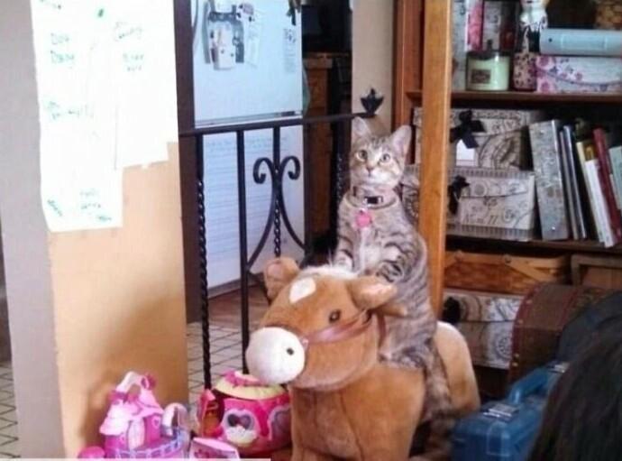 """""""Она увидела, как дети играют с лошадкой-качалкой и теперь мяукает, пока ее не покачают"""""""