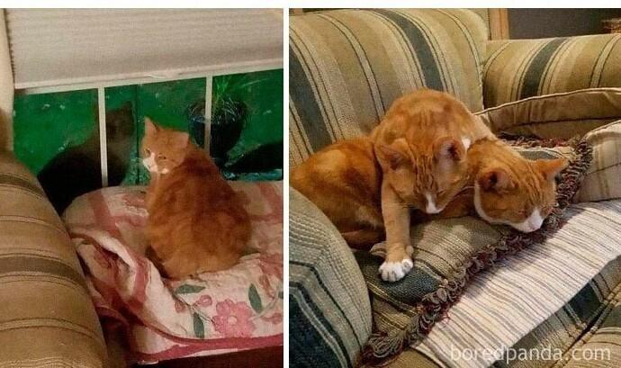 """""""Я спас местную бездомную кошку, забрав ее домой. А вскоре к ней стал заходить брат. У меня просто не было выбора"""""""