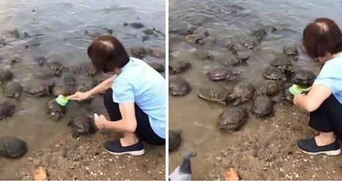 """Служительница ботанического сада оттирает от водорослей панцири местных черепах"""""""