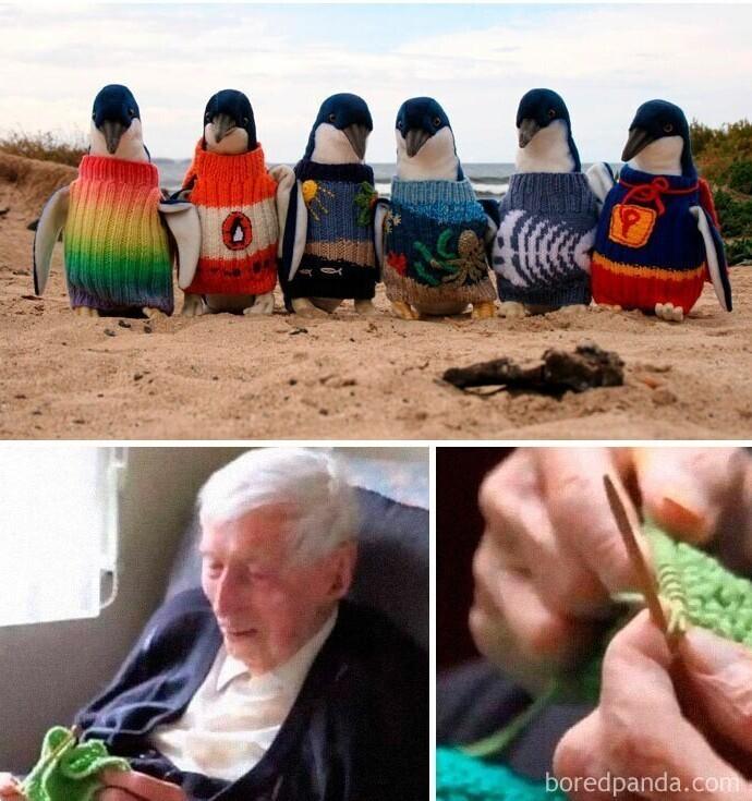 Самый пожилой житель Австралии вяжет свитеры для пигнвинов, пострадавших от разливов нефти