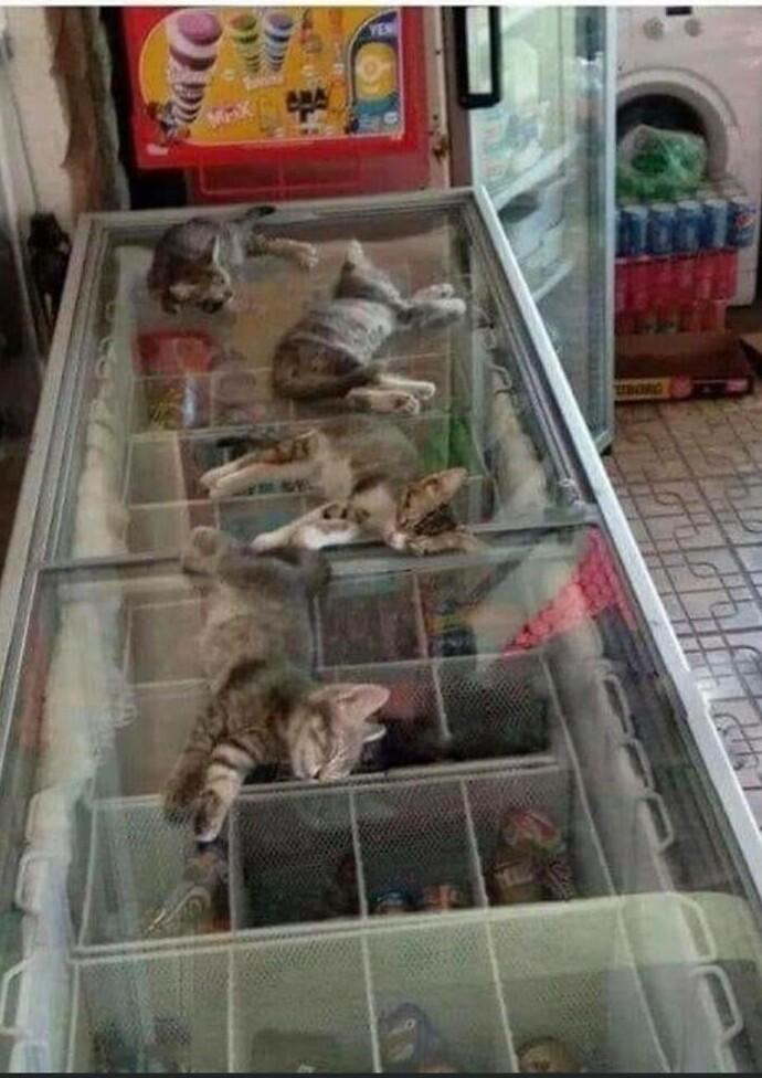 На улице жарко, поэтому продавщица разрешает местным котятам сидеть в магазине и спать на крышке холодильника