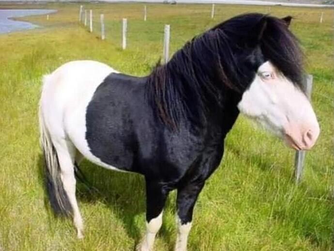 Тревор - пони-эмо
