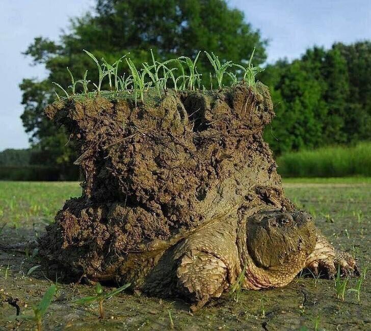 26. Черепаха после периода брумации (зимней спячки)
