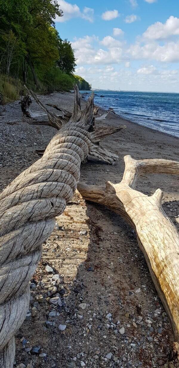 11. Искривленная коряга, найденная на пляже