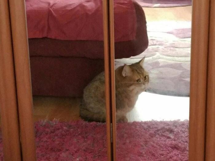 10. Кошачьи отражения - это всегда неожиданно