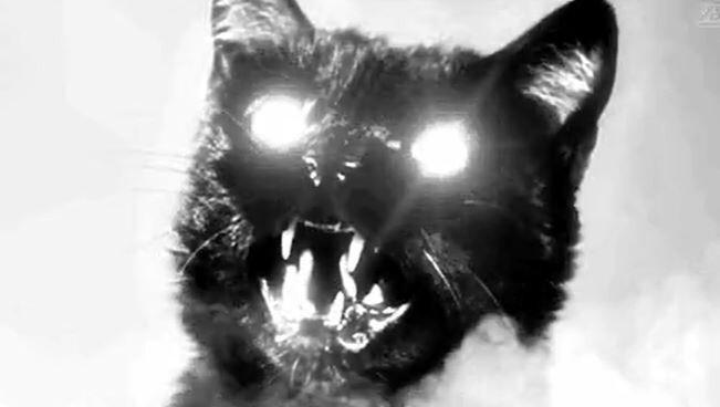 11. Кот по кличке Оскар жил в доме престарелых и якобы умел предсказывать смерть: те пациенты, которых он навещал, вскоре умирали. Он предугадал смерть 50 больных.
