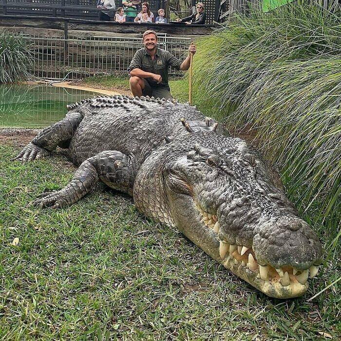 Огромный морской крокодил, Австралия