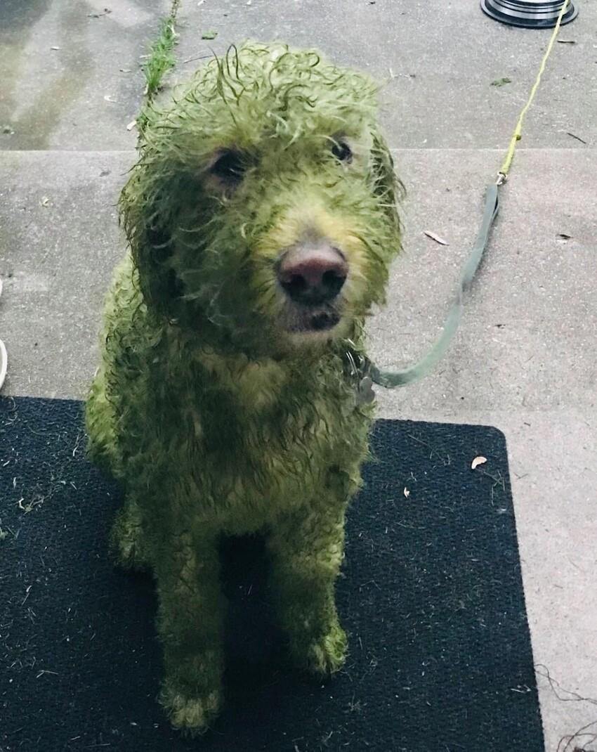 """17. """"Что если я выпущу белого пса на только что подстриженный газон?"""""""