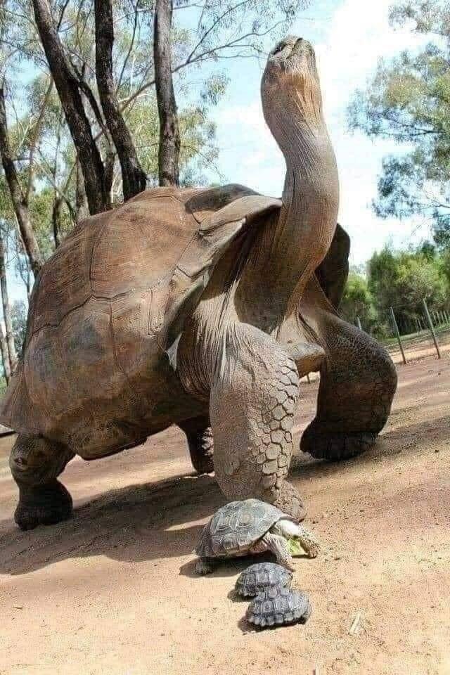 18. Эту черепаху зовут Джонатан, и он родился в 1832 году. В 2022 году ему исполнится 190 лет, что сделает его старейшим наземным животным на планете