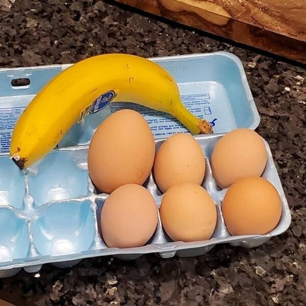 "34. ""Моя курица снесла гигантское яйцо"""