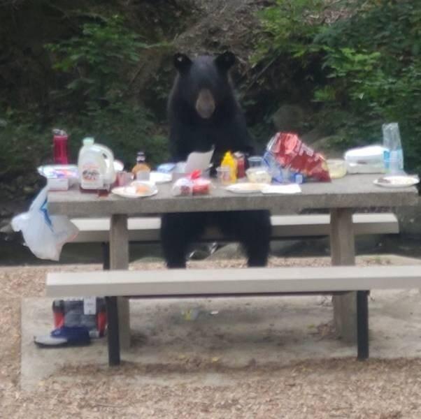 """24. """"Наш пикник прервал медведь, который уселся за стол совсем как человек и доел нашу еду"""""""