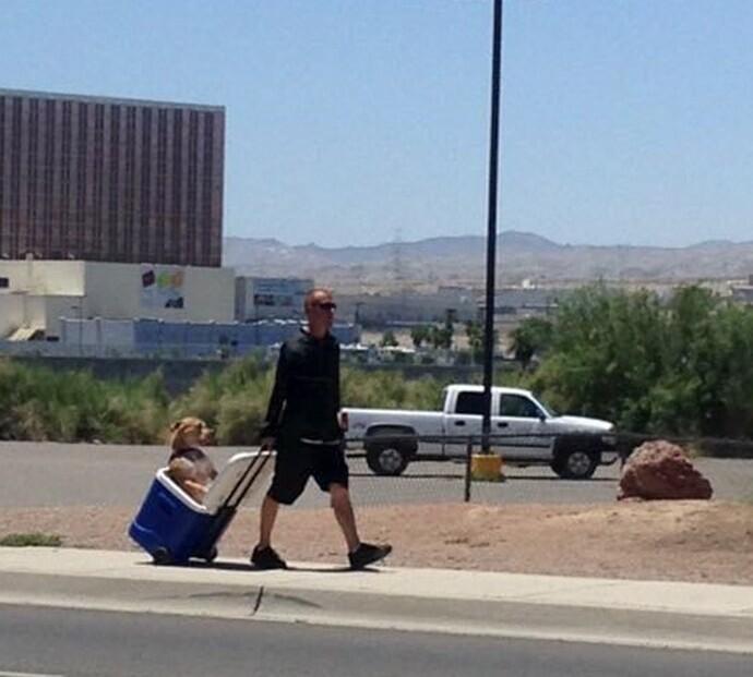 Во время жары в Аризоне хозяин пса, чтобы его питомец не обжег лапы об асфальт и не получил тепловой удар, возит его с собой в сумке-холодильнике